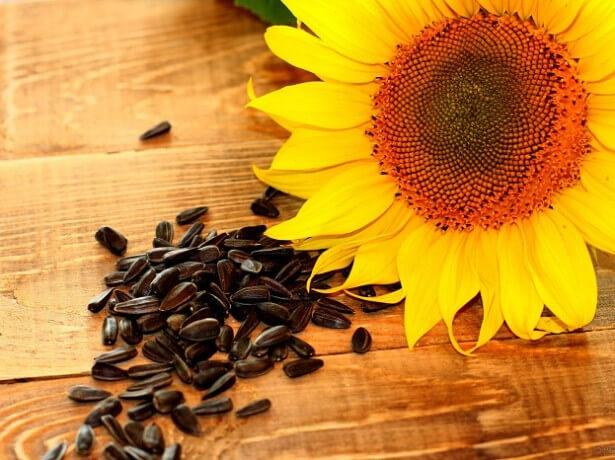 Семена подсолнечника вред